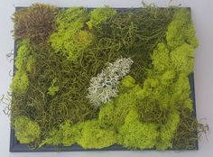 Preserved Moss Wall Art Original Botanical Wall by sycamoregrove                                                                                                                                                                                 More