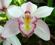 Semana do Meio Ambiente: Botânico sedia Show de Orquídeas   Notícias