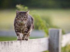 Cat on a rail