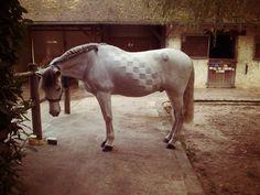Beautifully clipped grey :)