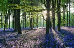 England, Hampshire, Micheldever Forest