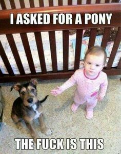 Asked for a #pony #lol #meme