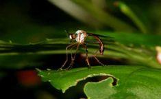 Método é forma natural de combater pragas e diminuir uso de pesticidas