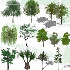 A collection of various trees like willow tree as SketchUp 3D models. Free download! Sketchup Free, Sketchup Model, 3d Tree, Playground Design, Landscape Architecture Design, Parking Design, Willow Tree, Landscaping Plants, Trees And Shrubs