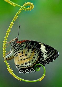 Lovely Butterfly. | Content in a Cottage
