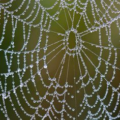 Chris Miller  Dew  Spider web made of crystal beads? Love this and may attempt to make it one day!