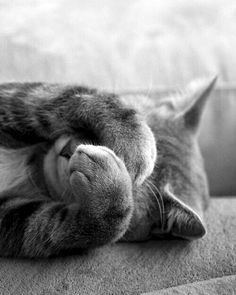 Be positive and have sweet dreams. meow...