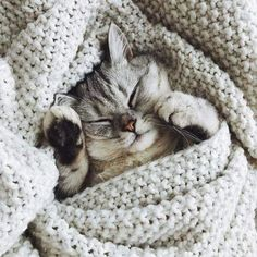 Image about sweet in Animals by Karoline on We Heart It Animals And Pets, Baby Animals, Cute Animals, Beautiful Cats, Animals Beautiful, Cat Photography, Cat Breeds, Crazy Cats, Cats And Kittens