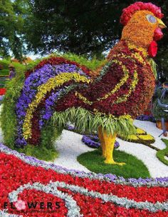 Rooster of flowers topiary by ConnieRose Art Floral, Floral Design, Amazing Gardens, Beautiful Gardens, Pink Flowers, Beautiful Flowers, Beautiful Gorgeous, Miracle Garden, Grass Flower
