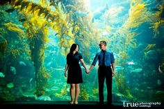 Aquarium Date: 1985 Artist and Related People: Artist: Lou ...
