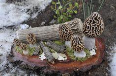 Hand Carved Morel Mushroom Group Diorama Antler by EnglishCarver, $199.99
