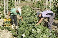 JORNAL REGIONAL EXPRESS: Empregos na agropecuária têm o maior saldo dos últ...