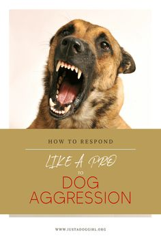 Learn tips and tricks about dog aggression.  Learn positive dog training methods.  Learn who to contact and where to find them.