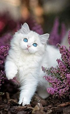 Cute Kitten Names Pair opposite Cute Cat Jewelry save Cute Kittens Cats Pictures his Cute Animals Names List Pretty Cats, Beautiful Cats, Animals Beautiful, Cute Cats And Kittens, Kittens Cutest, Kittens Playing, Fluffy Kittens, Cute Baby Animals, Funny Animals