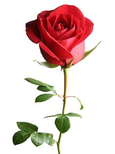 "Roses Not surprisingly, this classic bud is ""the most popular choice for Valentine's Day,"" says Kate Law, Product Design Manager at ProFlowers. Red roses symbolize love, romance, beauty and perfection. The iconic flower is also known for being pricey—according to Michael Gaffney, Director of the New York School of Flower Design, ""flower growers hold back their rose bushes for months in order to have them bloom in time for February 14th  Read more: Flower Meanings - Flower Symbolism…"