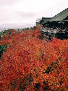 Fall Foliage of Kiyomizu-Dera, Kyoto. Kyoto, Travel Photos, Tours, Mountains, Fall, Nature, Autumn, Naturaleza, Bergen