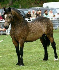 Cute Horses, Pretty Horses, Horse Love, Horse Photos, Horse Pictures, Most Beautiful Animals, Beautiful Creatures, Hello Beautiful, Zebras