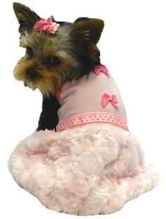 222 Best Dog dresses images  cf9803142