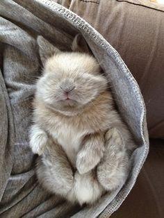 Bébé lapin qui s'est endormi