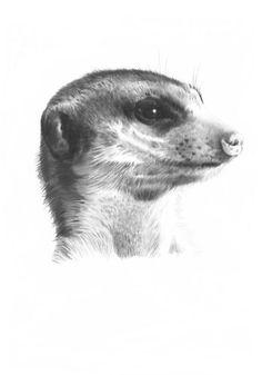 MEERKAT 4 Pencil Drawing Art Print Rare Picture ed | eBay
