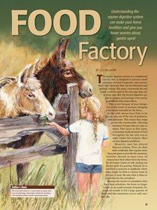 """[SPECIAL REPORT] The Equine Digestive System: Food Factory - TheHorse.com 