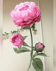 """205 Likes, 5 Comments - #Букетыизконфет #Ростовыецветы (@charme_sweetflowers) on Instagram: """"#ростовыепионы #ростовыецветы #пионы #пионыспб #пиондляфотосессии"""""""