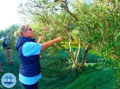 OLYMPUS DIGITAL CAMERA Olive Harvest, Olive Press, Oil Shop, Old Mother, Crete Greece, Olympus Digital Camera, Growing Tree, Greek Islands, Yummy Snacks