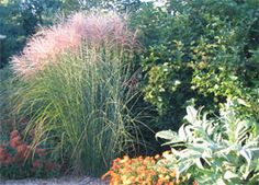 Introduction to Perennial Garden Design - University of Illinois Extension