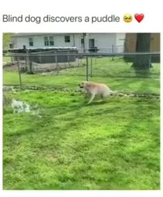 Funny Animal Jokes, Funny Animal Pictures, Animal Memes, Cute Animal Humor, Animal Humour, Animal Pics, Animal Quotes, Cute Funny Dogs, Cute Funny Animals
