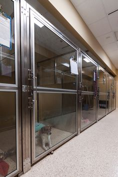 Extra-wide glass doors - Photo gallery: Veterinary housing solutions to show cats and dogs the love - dvm360