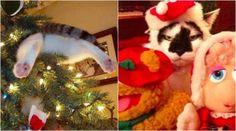 19 katter som absolut INTE �lskar julen lika mycket som du g�r
