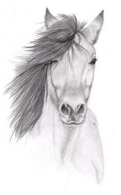Image result for interesting art drawings of animals