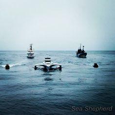 Sea shepherd fleet