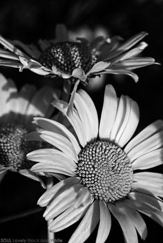 white flowers  | black and white photo
