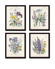 French Botanical Collage Print Set No. 2 Set of 4 Fine Art Giclee Prints - Unframed from Belle Maison Art Flower Prints, Flower Art, Arte Floral, Background Vintage, Botanical Prints, Botanical Decor, Printable Art, Printables, Paper Texture