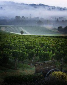 Cadillac Vineyards / France ~ by Chris Davis - taken August 2009