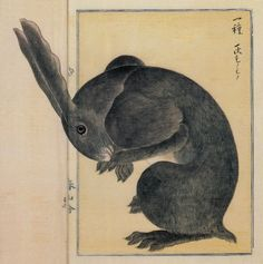 "Illustrations from an Japanese 1850s ""Materia Medica"" Book PUBLIC DOMAIN"