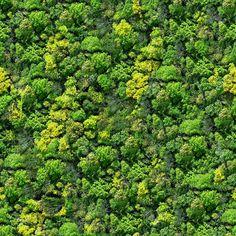 6808710-Forest-nahtlose-Muster-Ansicht-von-oben--Lizenzfreie-Bilder.jpg (1300×1300)