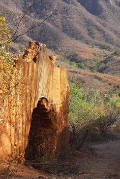Casas abandonadas de adobe en #Alamos, en el estado norteño de #Sonora, #Mexico. Reliquias de la historia que narran épocas pasadas en una región que merece ser visitada. http://www.bestday.com.mx/Hoteles/
