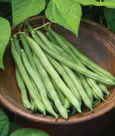 This bush bean is a big star in small gardens. The crispy pods grow to 11 inches long and have a delicious, nutty flavor. 'Big Kahuna' stays compact, at about 2 feet tall, so it's useful in containers, too. Easy Vegetables To Grow, Growing Veggies, Fruits And Vegetables, Growing Beans, New Fruit, Fruit And Veg, Bean Varieties, Bush Beans, Bean Seeds