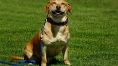animal-3012758_960_720 Pets, Fitness, Animals, Pet Care, Dressage, Bathing, Cute Pets, Canela, Diy Dog