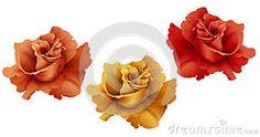 Resultado de imagen para rosas pintadas