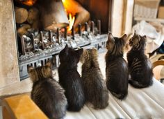 cats by the fireplace - Google претрага