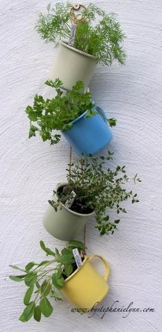Hanging coffee cup herb garden