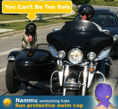 Page Not Found - Nammu Swimming Hats Dog Helmet, Swim Caps, Close To My Heart, Banners, Cute Dogs, Antique Cars, Swimming, Bike, Sun