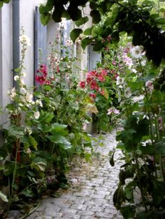 Along The way, Ile de R�, France Western Coast, Poitou Charentes, Hollyhock, French Country House, France, Dream Garden, Garden Paths, Along The Way, Beautiful Gardens