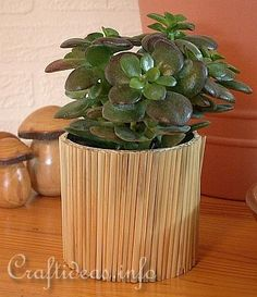 Recylcling Craft - Tin Can Decorated with Natural Straws - Flower Pot