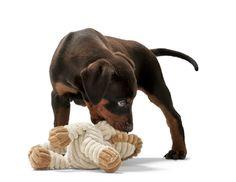 Doberman-Welpe mit Hundespielzeug HUGGLY ZOO