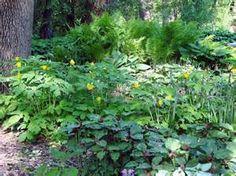 Shade Garden this Morning
