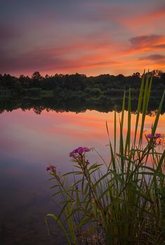 The sunset reflects over Fairfield Lakes with flowers and grasses in the foreground